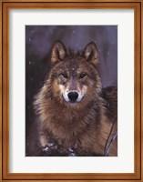 Woodland Pride, Montana Fine Art Print