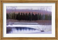 Cedars and Brook - Winter Fine Art Print