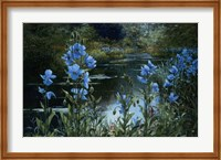 Blue Poppies Fine Art Print