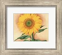 A Sunflower from Maggie, 1937 Fine Art Print
