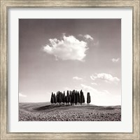 Cypress Trees Fine Art Print