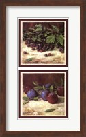Blackberry Plum Combo Fine Art Print