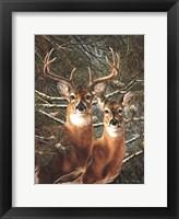 Among the Pines Fine Art Print