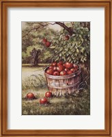 Apple Orchard Fine Art Print