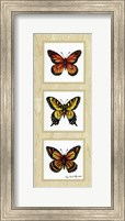 Monarch Butterflies Fine Art Print