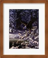Eagle In Flight Fine Art Print