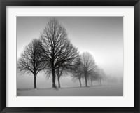 Winter Trees III Fine Art Print