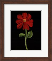 Red Cosmos Fine Art Print