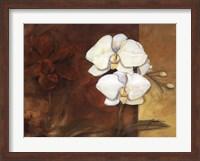 Luisia I Fine Art Print