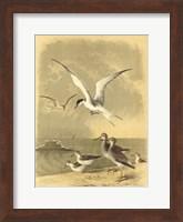 Coastal Dwellers I Fine Art Print