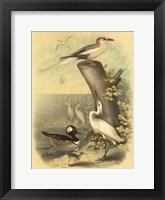 Coastal Dwellers II Fine Art Print