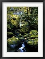 Elowah Falls Fine Art Print