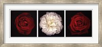 Rose Gallery I Fine Art Print