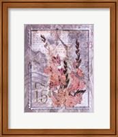 Love Letter Gladioli Fine Art Print