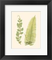 Woodland Ferns VI Fine Art Print