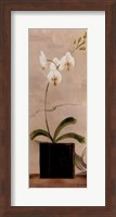 Asian Orchid II Fine Art Print