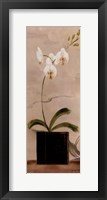 Asian Orchid II Fine Art Print