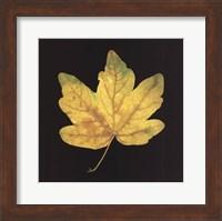 Yellow Maple Fine Art Print