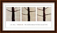 Timberline Fine Art Print