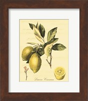 Petite Tuscan Fruits II Fine Art Print