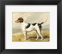Fox Hound Fine Art Print