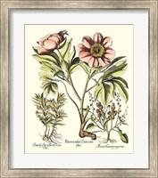 Framboise Floral II Giclee