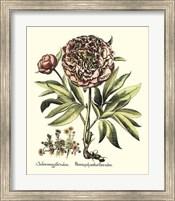 Framboise Floral III Giclee