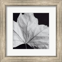 Leaf Wall Poster