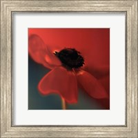 Red on Turquoise Fine Art Print
