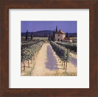 Vineyard Shadows Fine Art Print