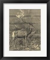 Vintage Roe Deer II Fine Art Print