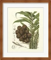 Island Fruits I Giclee