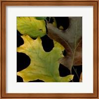 Vivid Leaves II Giclee