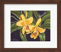 Vibrant Orchid I Fine Art Print