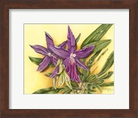 Vibrant Orchid IV Fine Art Print