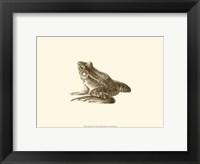 Sepia Frog I Fine Art Print