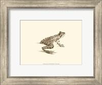 Sepia Frog II Fine Art Print