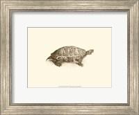 Sepia Turtle I Fine Art Print