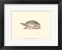 Sepia Turtle II Fine Art Print
