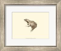 Sepia Frog III Fine Art Print
