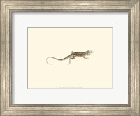 Sepia Lizard II Fine Art Print