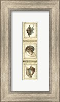 Mini Rustic Shell Panel II Fine Art Print