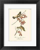 Wandering Rice Bird Fine Art Print