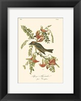 Pipiry Flycatcher Fine Art Print