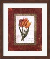 Tulip De Gesner Fine Art Print