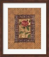 Rose Illumination I Fine Art Print