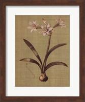 Botanica Verde I Fine Art Print