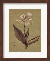 Botanica Verde II Fine Art Print