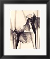Japanese Iris Fine Art Print