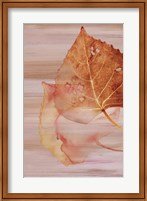Autumn Radiance II Fine Art Print